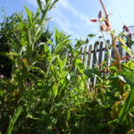 How To Eliminate Weeds With Ease