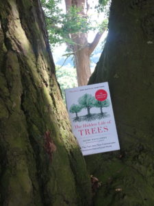 Book: The Hidden Life Of Trees