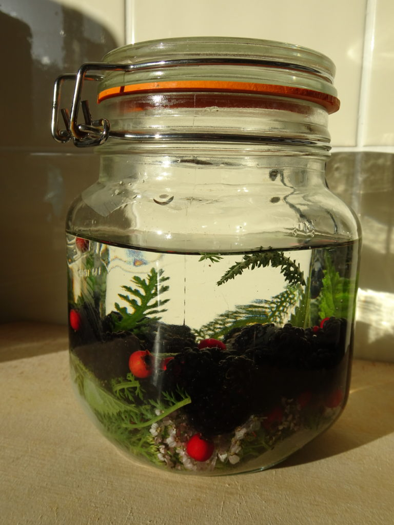 blackberry and yarrow vodka