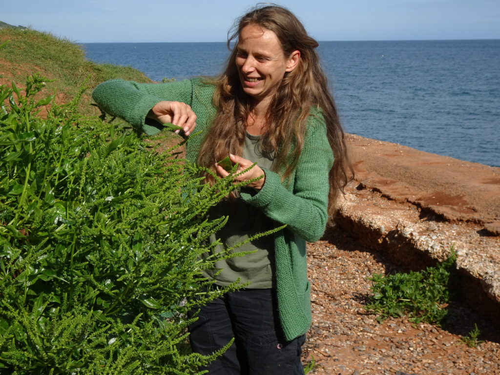 foraging sea beet
