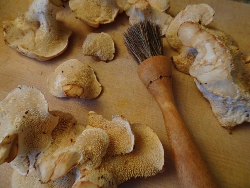 cleaning hedgehog mushrooms